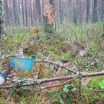 הרפתקאות יער ברנטי