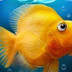 מיכל דגים אקווריום