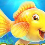 טירוף דיג – דיג סופר
