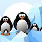 פאזל שקופיות של פינגווין